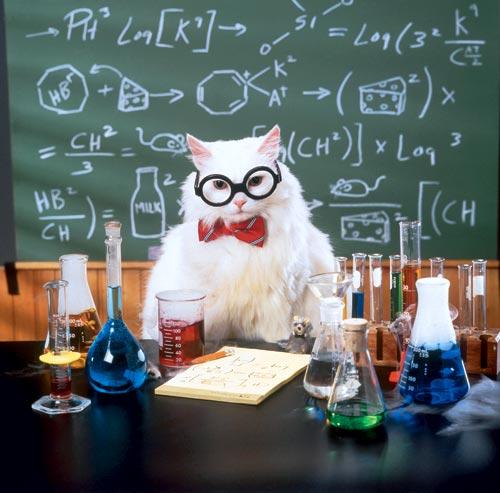 Фотографии кошек - Страница 2 08f81d859dbf