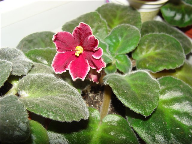 Весеннее  цветение (Хваст от Веры) - Страница 4 10c6417e8c97