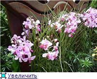 Парк орхидей в Ботаническом саду Сингапура. 2e67783fed12t