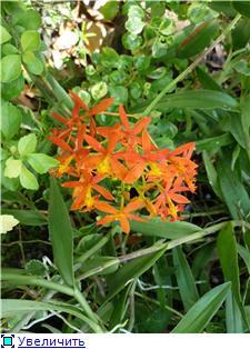 Парк орхидей в Ботаническом саду Сингапура. 0843dc4cd9ect