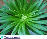 Горшечные лилии Ceef6789bdf6t
