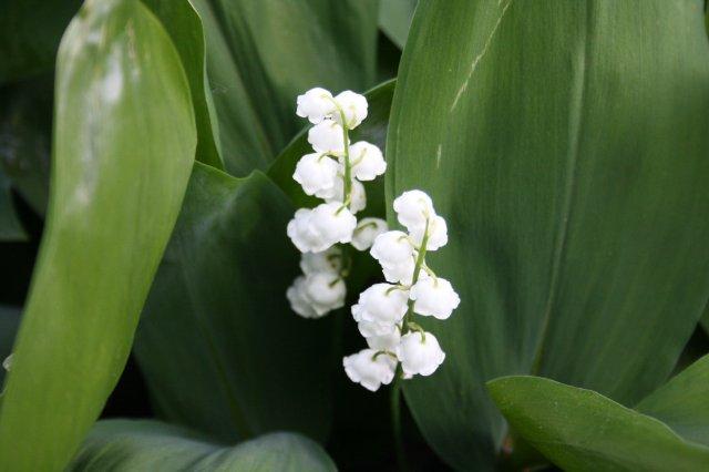 Растения от FILIGERa - Страница 2 C327f44471e6
