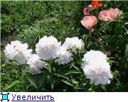 Лето в наших садах - Страница 2 3498e5b3ef43t