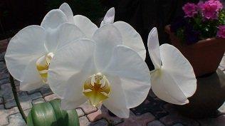 И мои хвастушки-цветушки! - Страница 36 7ff1d784dae8