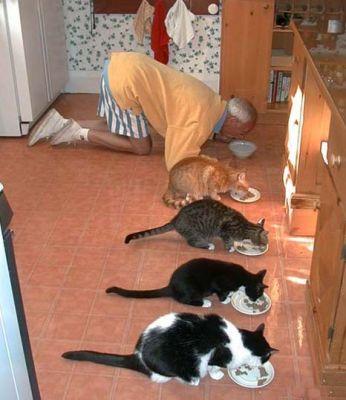 Фотографии кошек - Страница 2 Dee1ac4bbbb9