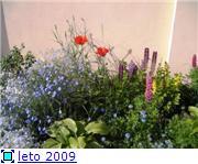 мои цветочки 5c89e4dcfe25t