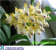 наши домашние цветники D7e7a678f5f7t