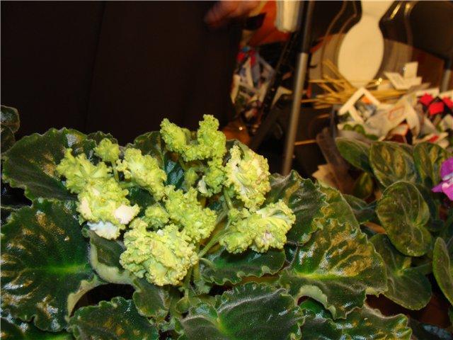 Международая выставка «Цветы.Ландшафт .Усадьба 2010» Астана - Страница 2 6b390b64e66a