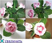 Наши цветочки 8c02010a9a46t
