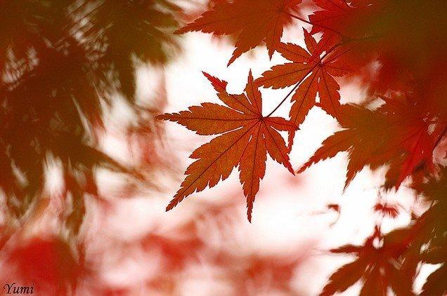 Японская культура и традиции. - Страница 3 7bfa3467c8c9