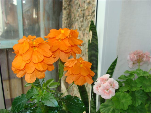 Весеннее  цветение (Хваст от Веры) - Страница 4 Fead0040868c