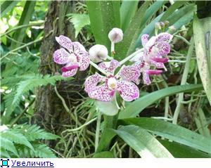 Парк орхидей в Ботаническом саду Сингапура. 524456328740t