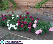Наши цветочки 8867ddbd8d05t