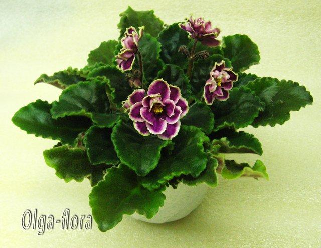 Цветение к Н. Г. (Olga-flora) - Страница 5 06422711979d