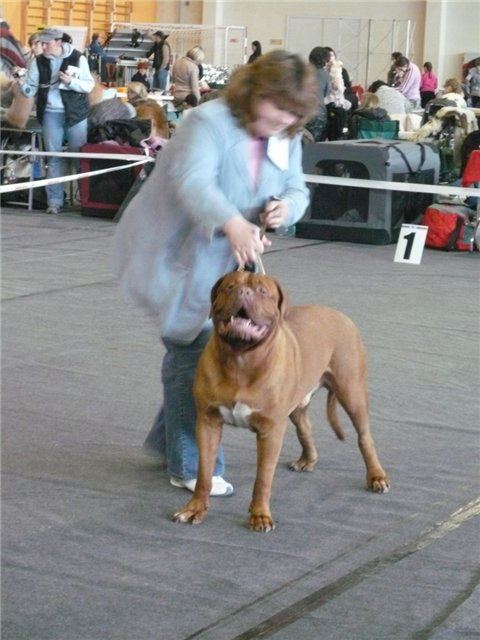19.02.11. NATIONAL DOG SHOWS IN VALMIERA, LATVIA 9679d4fae2c1