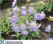 Лето в наших садах - Страница 7 0e4ce56e6480t