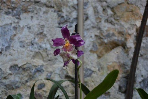 Выставка орхидей Никитского ботанического сада 115c96df5ddd