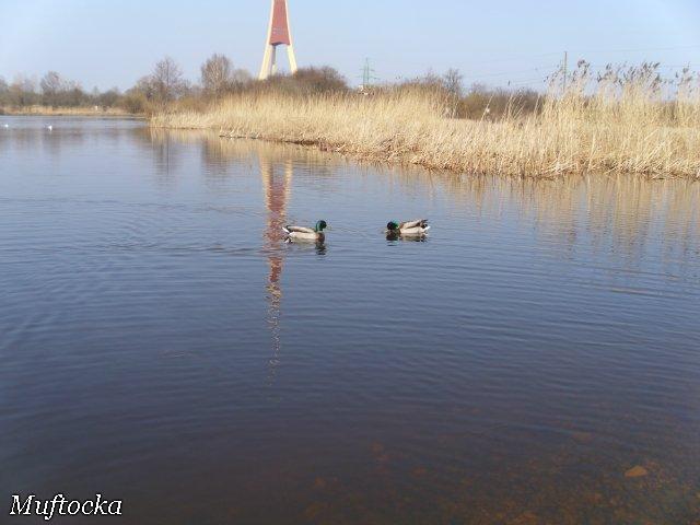 Собаки Татьяны Моисеенковой, кот Мензурка - Страница 3 C08648e660e8