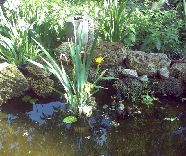 Ландшафтный дизайн... Сделаем свой сад самым красивым! - Страница 6 B7cfbfba7640