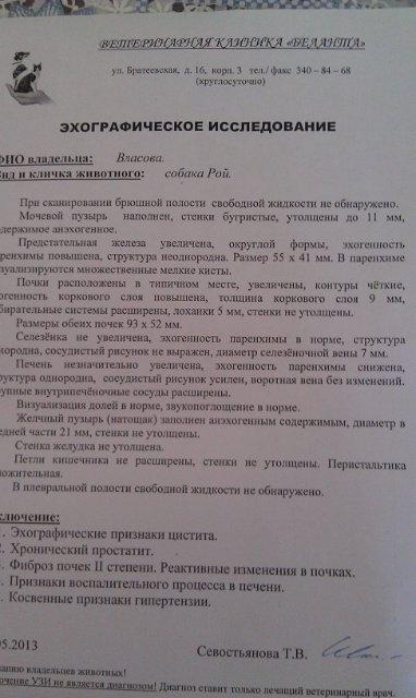 Москва. Метис боксера Рой. 14 лет. Выгнал хозяин. Efc547372033