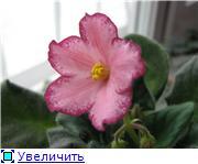 наши домашние цветники - Страница 2 4987a49ec72dt