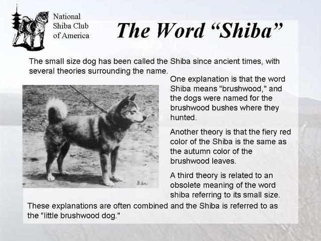 Информация о Шиба-Ину 824ecad2396d
