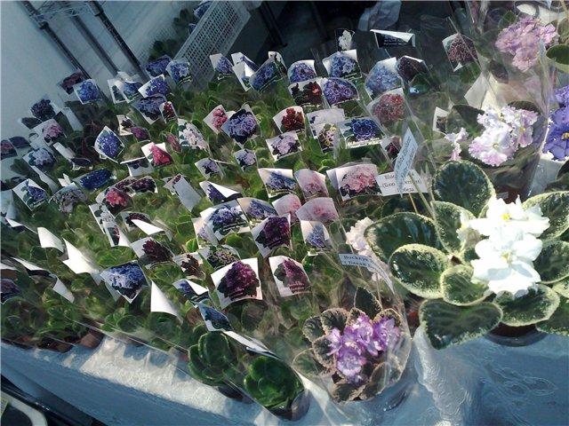 «Цветы.Ландшафт и Приусадебное хозяйство Весна - 2010» 2967785bf53a