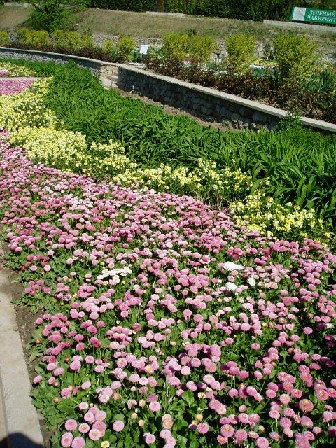 Крым. Никитский ботанический сад. 14666a4597b3