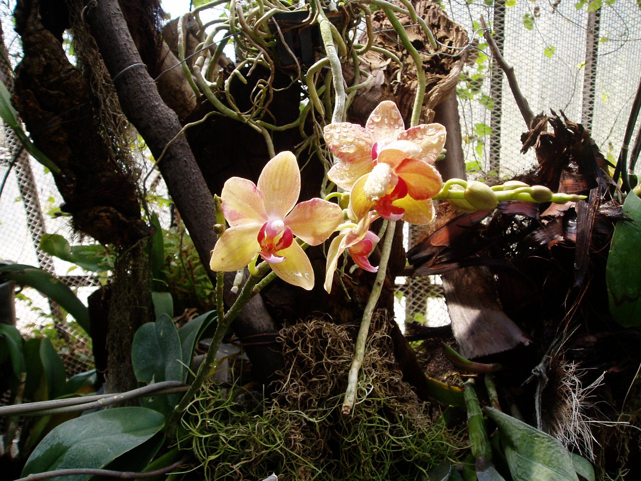 Выставка Орхидей D16fe99be0a8