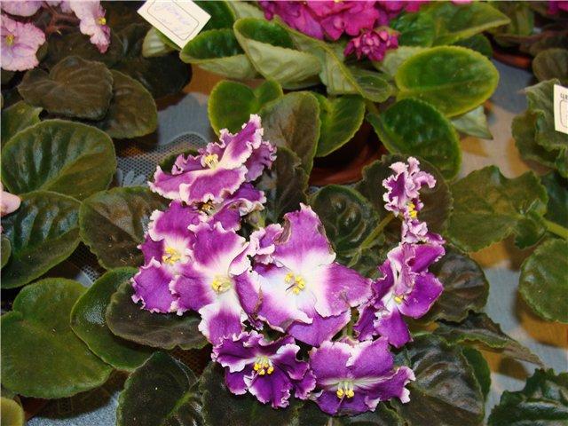 Международая выставка «Цветы.Ландшафт .Усадьба 2010» Астана - Страница 4 4bf2eab85054