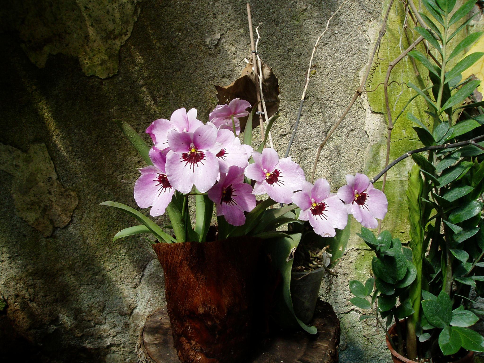 Выставка Орхидей 37c6a0838996