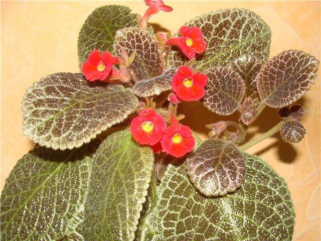 Весеннее  цветение (Хваст от Веры) - Страница 4 68ff6abb9bae