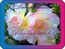 продам семена экзотических растений - Страница 3 05d83eb12bcc