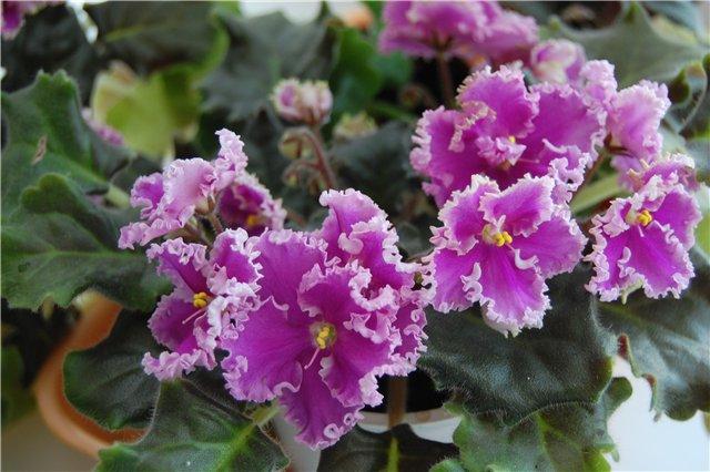 Продам, общие объявления по продаже растений Ab46434c7c8d