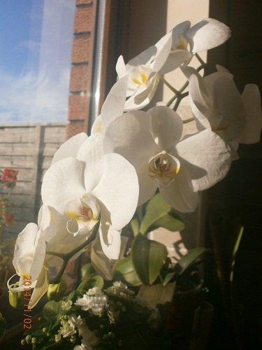 Разводите ли дома цветы и какие? - Страница 34 8dab51076cdd