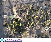 Весна идет, весне дорогу! - Страница 3 E734c53f3957t