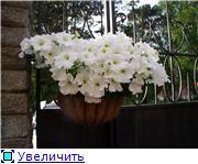 Лето в наших садах - Страница 2 85a52c94bc2et