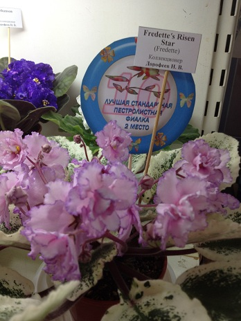 Выставка цветов - Страница 2 C240d0c937e1