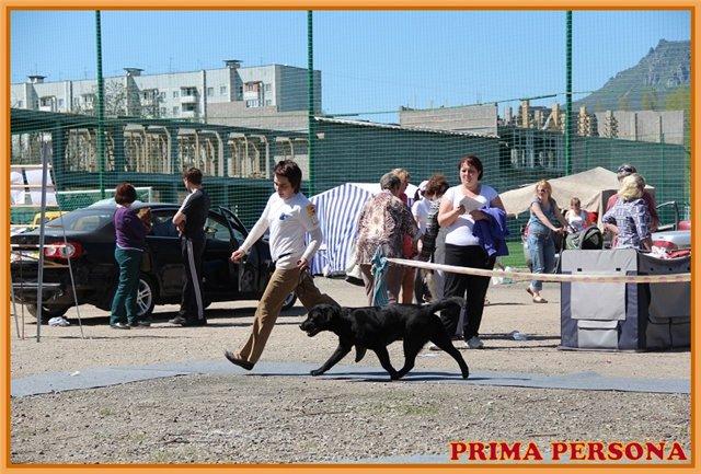 """Питомник """"Прима Персона"""". Мои собаки-моя жизнь! - Страница 2 E9e65cbc969e"""