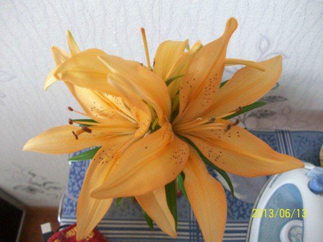 Горшечные лилии 88c7426f697e