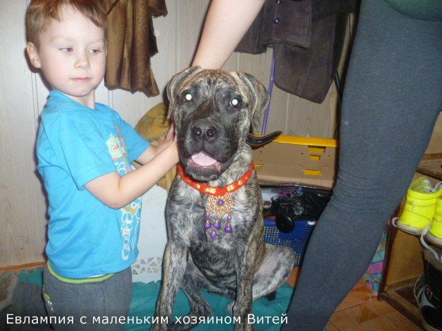 "Фотографии ""Бульмастиф и дети"" 2be4edad2acf"
