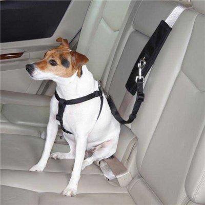 Интернет-зоомагазин Pet Gear - Страница 2 E8a26b5581cd