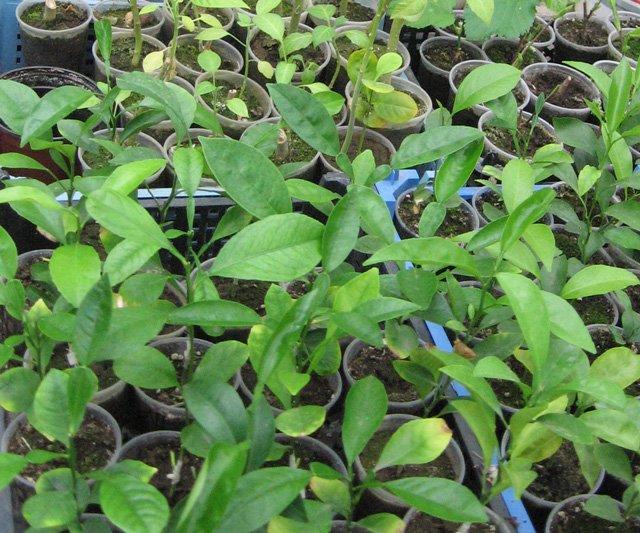 Растения из Нижегородской оранжереи A9003e14c25b
