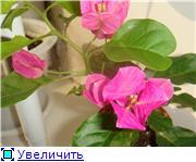 """""""Цветочки на окне - очей очарованье..."""" - Страница 2 0b3547d3b2abt"""