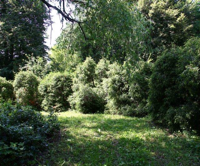 Экскурсия по Ботаническому Саду 776c9c32cf01