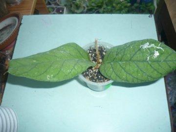 декоротивно-лиственные и красивоцветущие растения - Страница 4 Ec59736580b9