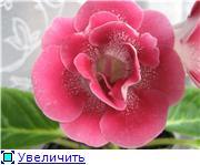 Семена глоксиний и стрептокарпусов почтой - Страница 7 Cd3a681bcbe6t