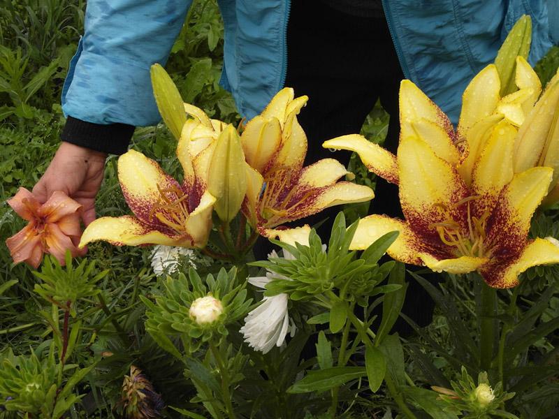 Участок с ноля для нулевого садовода-огородника A44527612abc