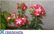 Формирование Адениума - Страница 2 30dcea853d9ft