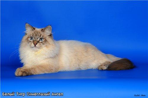 Форум для любителей кошек - Портал 21c0295073a1